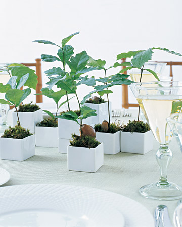 Seedling Favours